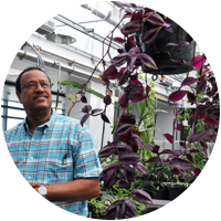Professor Kamal Mohamed in Shineman greenhouse