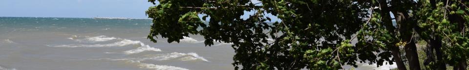 Lake Ontario & tree