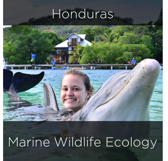 honduras, marine wildlife ecology