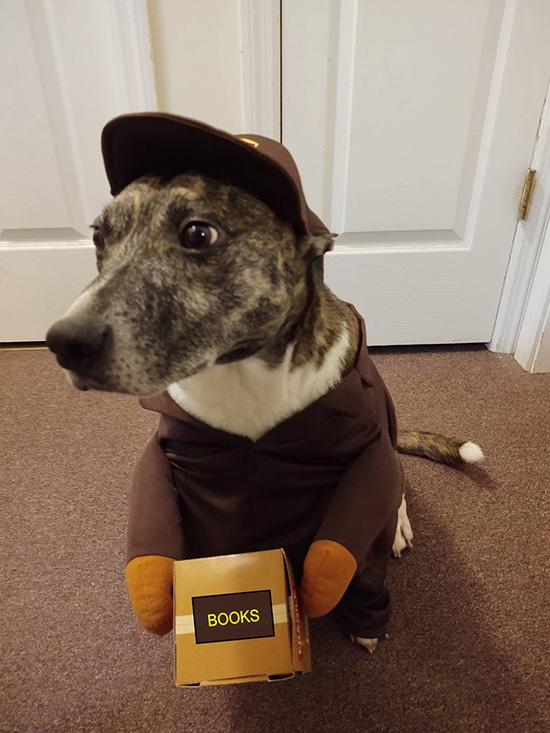 Friendly dog dressed up as a mail carrier, delivery books.