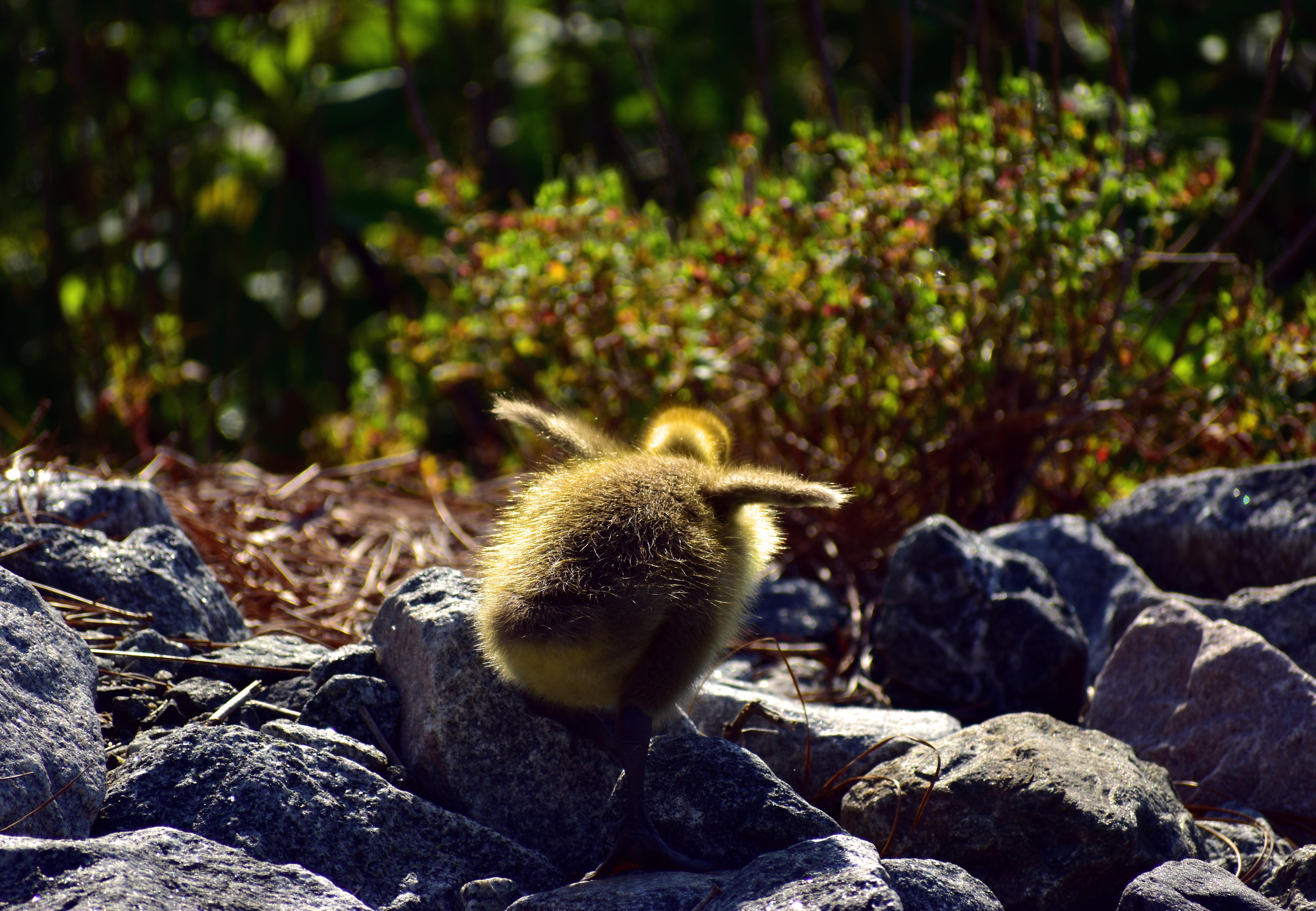 Bailey Maier photo of a baby bird from exhibition in Penfield Library