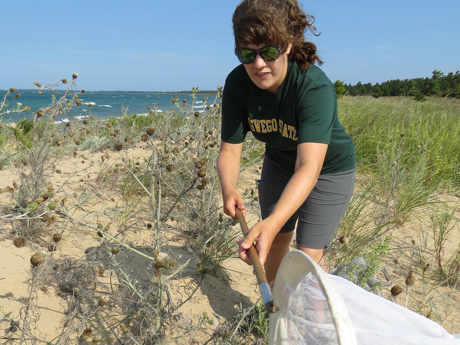 Stephanie Facchine working with rare, threatened Pitcher's thistle plants