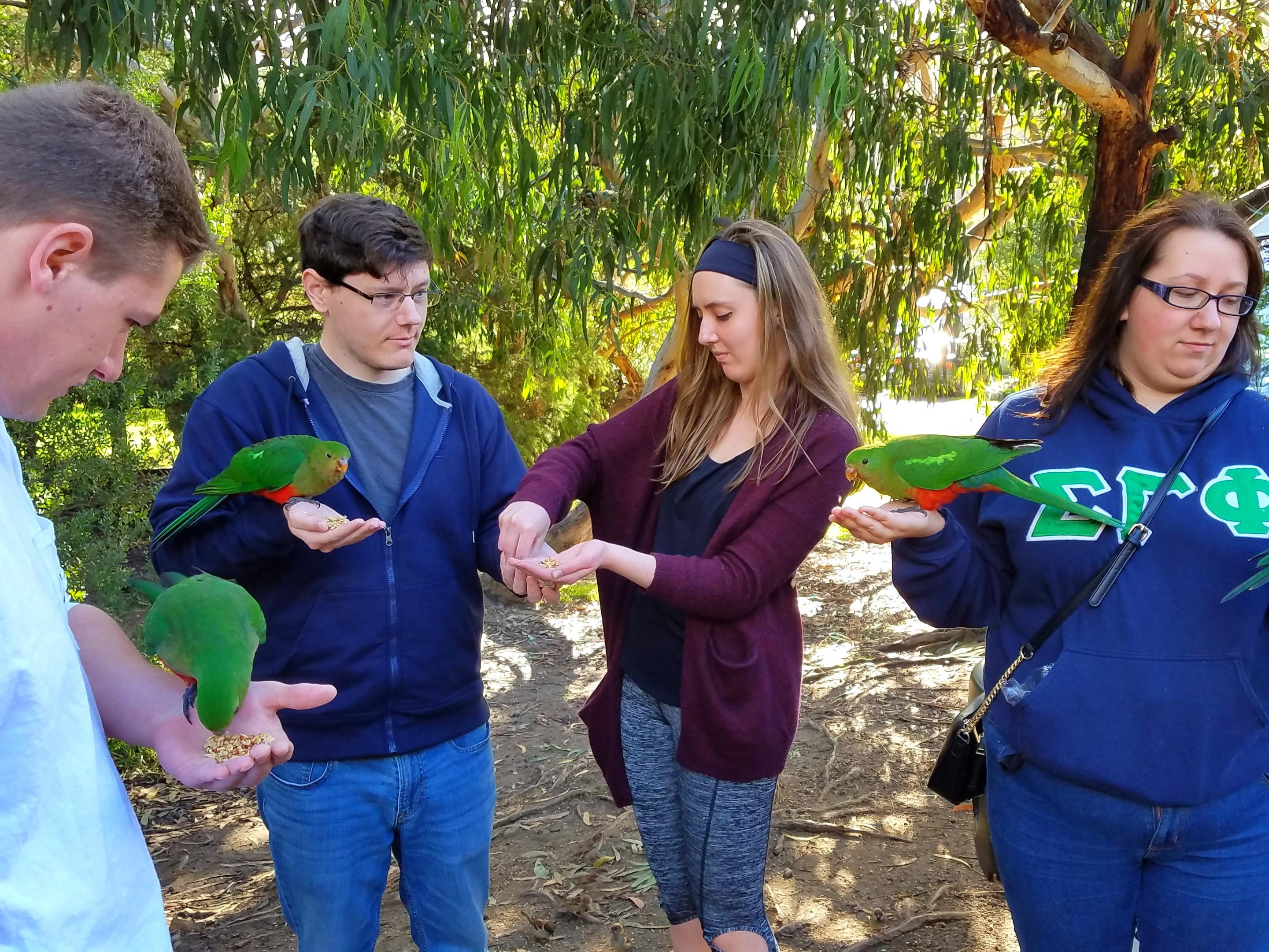 Students with rainbow lorikeets along Great Ocean Road