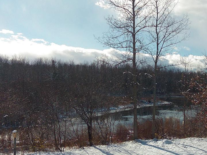 Winter scene of Rice Pond and trees at Rice Creek Field Station