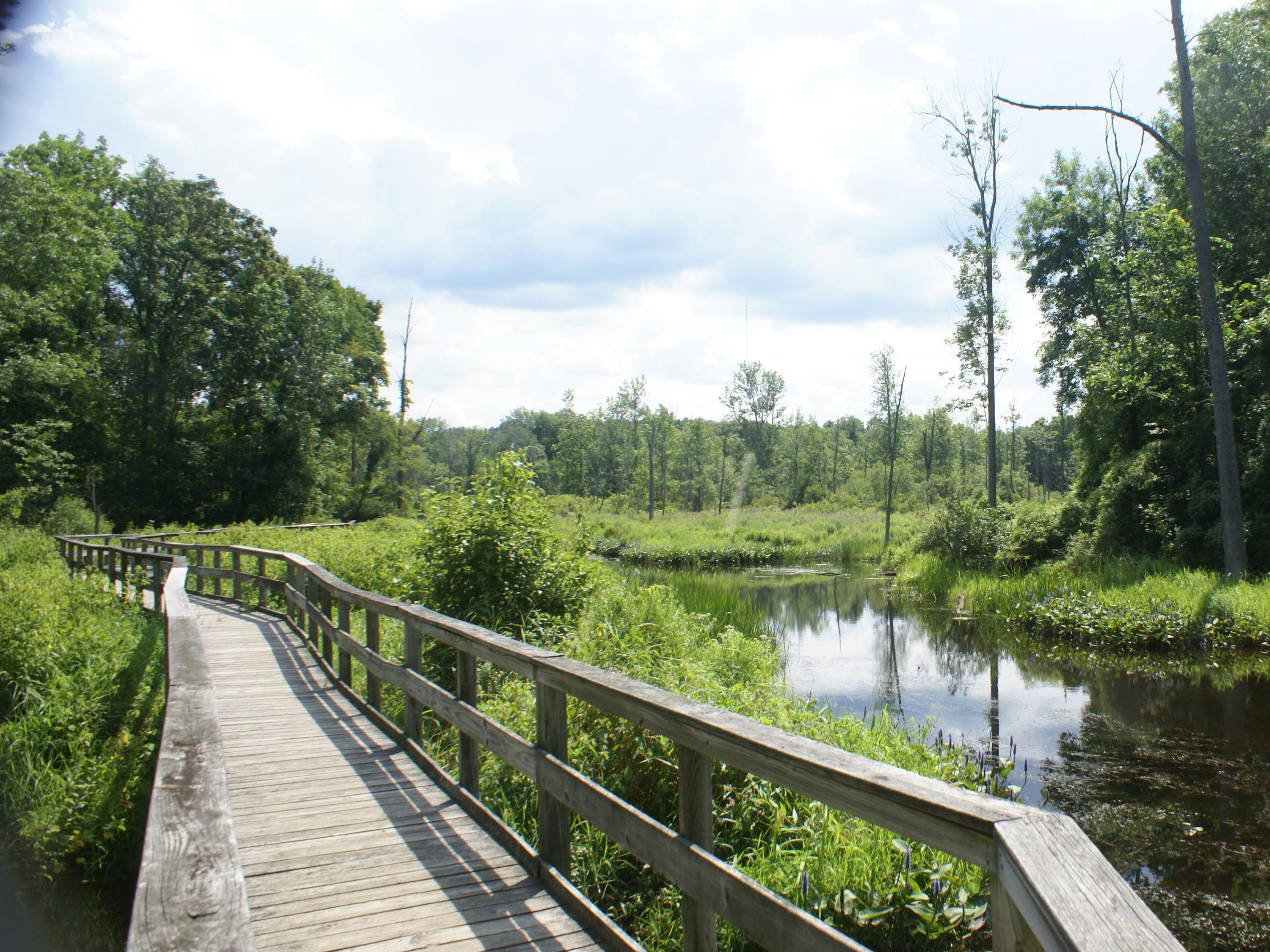 Wooden footbridge over wetlands at Rice Creek Field Station