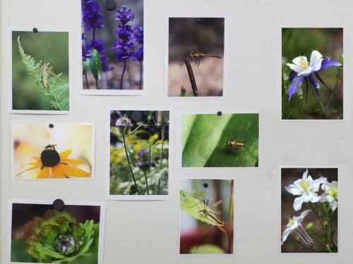 Flora and Fauna is a series of digital photographs of nature by Kelly Roe