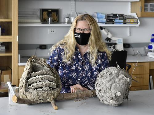Biological sciences faculty member Karen Sime shows the inside of insect nests, one of her research areas