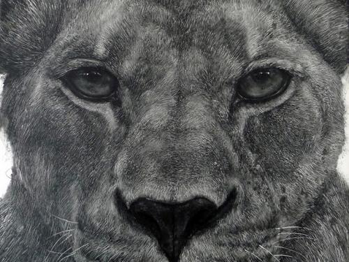Artistic rendering of the face of a lioness