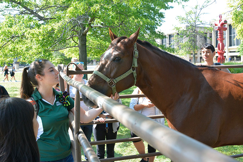 Chester the horse greets visitors