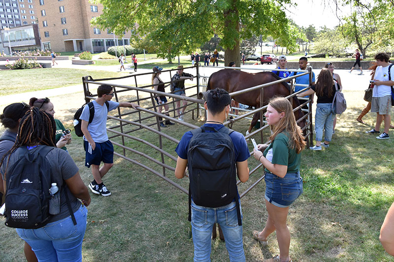 Equestrian Club with Chester the Horse in the quad