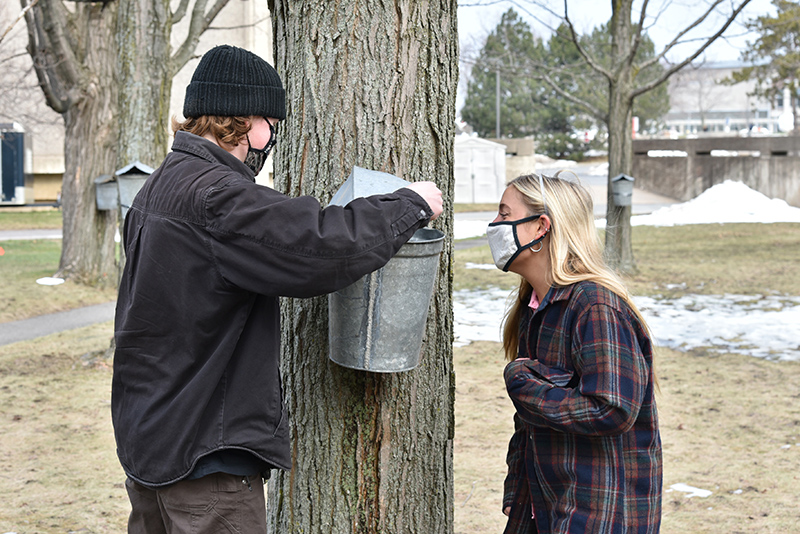 Sustainability Office interns Jackson DeClerck (left), a junior technology management major, and Sarah Smelko, a junior global studies major, both second semester juniors, tap sugar maple trees March 3 in Sheldon Park between Culkin Hall and Hewitt.