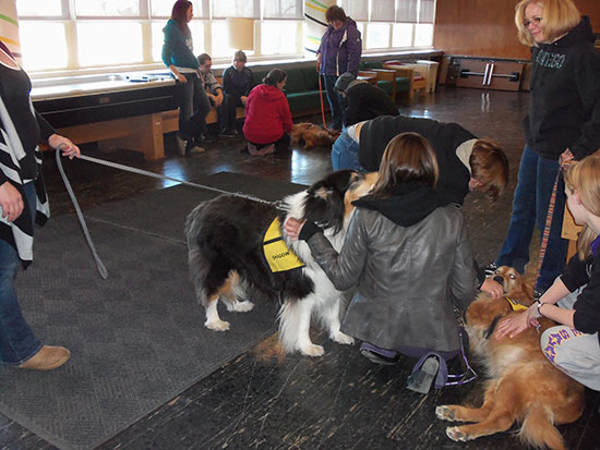 Therapy dogs visit Mackin main lounge.