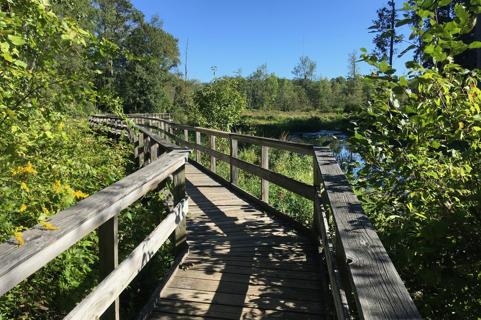 Green Trail boardwalk