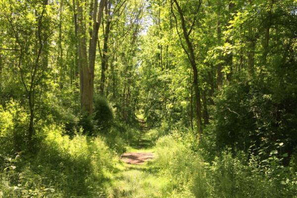 lush trail in summer