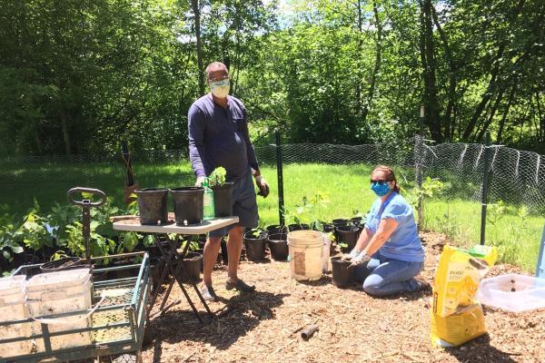 People transplanting tree seedlings, wearing masks
