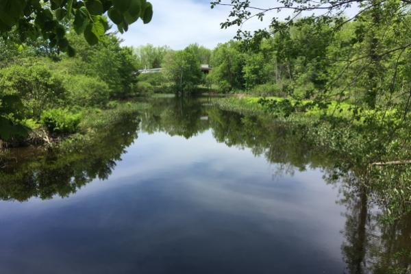 Rice Creek reflection