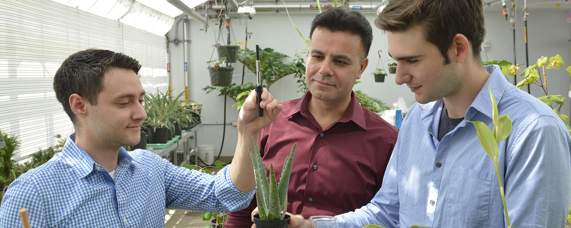 Vadoud Niri and research students analyze plants