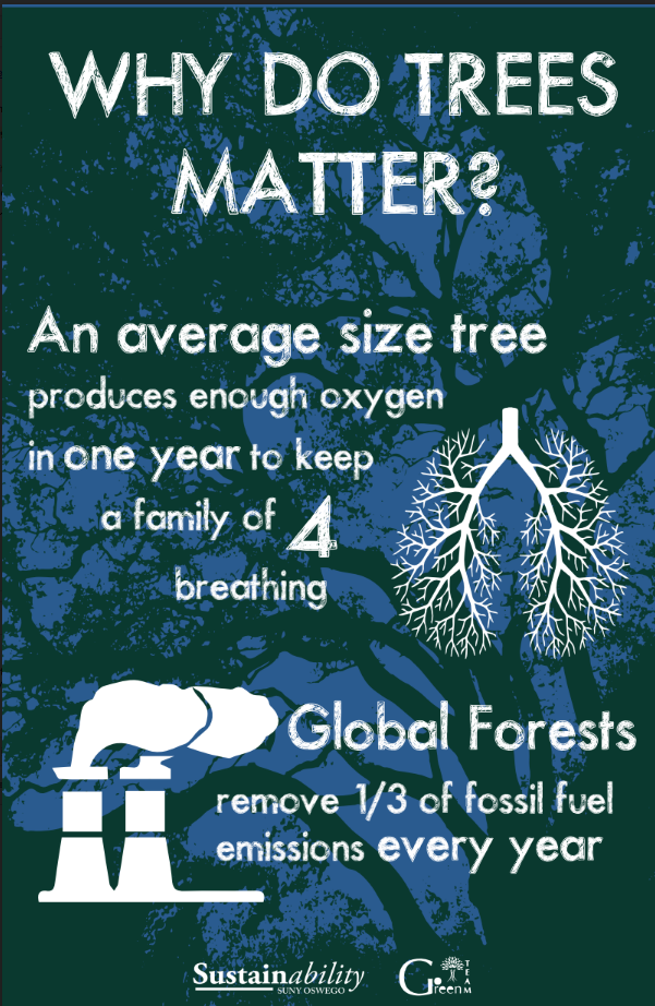 Why do trees matter? An average size tree produces enough oxygen in one year to keep a family of four breathing. Global forests remove one third of fossil fuel emissions every year